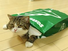 Maru channels his inner turtle Animals And Pets, Cute Animals, Dog Cat, Pet Pet, Japanese Cat, Scottish Fold, The Funny, Funny Cats, Turtle