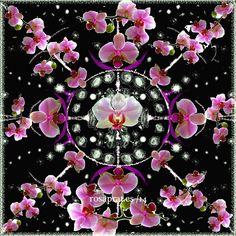 Mandala de orquideas. composición sobre fotos. Floral Wreath, Wreaths, Home Decor, Mandalas, Flowers, Floral Crown, Decoration Home, Door Wreaths, Room Decor