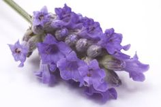 """15 anxiety relievers: #1 Passionflower-  shown to be as effective as sedatives like valium, for nervous tension and anxiety. This nervine herb is also """"antispasmodic"""" which makes it great for people with constant nervous twitching.  #2 Ashwaganda- """"adaptogenic"""" herbs help tolerate stressful days much better. Take as tea, or capsules of the root and take two capsules twice a day.  Intended for the exhausted and agitated or debilitated by stress. In ayurvedic renowned anti-aging and…"""