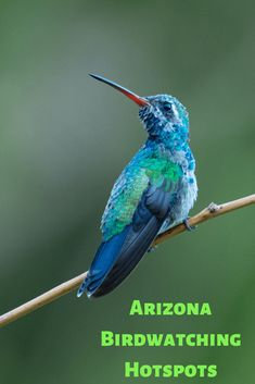 Believe it or not, birdwatching can be downright adventurous! Check out some of my favorite Arizona birdwatching adventures and hotspots. State Of Arizona, Arizona Travel, Arizona Trip, Amazing Nature Photos, Animal Experiences, Dog Travel, Picnic Area, Birdwatching, Kayaking