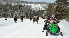 snowmobiling yellowstone
