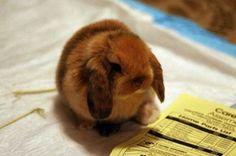Fuzzy bunny baby