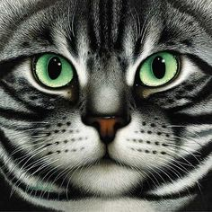 Braldt Bralds - AMERICAN SHORTHAIR -  LIMITED EDITION PRINT Published by the Greenwich Workshop