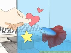 How to Grow a Bond With Your Betta Fish: 11 Steps (with Pictures) Betta Aquarium, Catfish Fishing, Fly Fishing, Fishing Tips, Fishing Knots, Fishing Humor, Fishing Lures, Betta Tank, Fish Tank