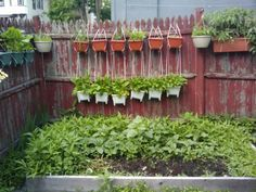I'm all about the hanging potted veggie garden this year!