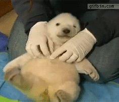 Bear cub being trickled!