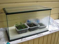 Pienoiskasvihuone taimille. Vanha akvaario uusiokäytössä. Pohjalla styroxi ja päällä lasilevy.