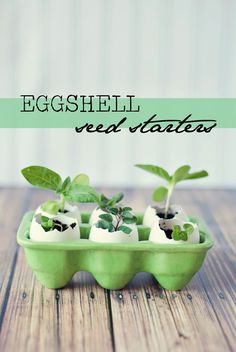 Eggshell Seed Starter - These biodegradable eggshell planters are perfect for starting seeds