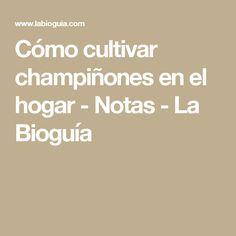 Cómo cultivar champiñones en el hogar - Notas - La Bioguía