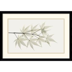 @Overstock - This breathtaking framed art print by Koetsier instantly gives any room a natural but contemporary feel. The image of Japanese maple leaves commands attention with its delicacy, but at 10.75 x 17.75 inches, it wont demand huge amounts of wall space.http://www.overstock.com/Home-Garden/Albert-Koetsier-Japanese-Maple-Framed-Art-Print/6691627/product.html?CID=214117 $94.99