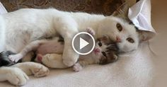 Precious Moment of Mama Cat and Her Cute Kittens Will Melt Your Heart!