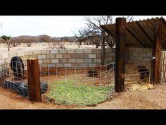 Building a Pig Pen - Organic Shape - Rehoming a Heritage Hog - Large Black & Her Piglets - YouTube