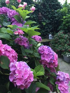 Hortensien Flowers, Plants, Hydrangeas, Plant, Royal Icing Flowers, Flower, Florals, Floral, Planets