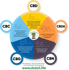 Our That's Natural CBD-rich hemp oil products have a full cannabinoid and terpene profile!  Using a whole plant and full spectrum oil, this ensures that you will receive the Entourage Effect!  The major cannabinoids in our products include: CBD (Cannabidiol), CBDa (Cannabidiolic Acid), CBC (Cannabichromene), CBG (Cannabigerol), and CBN (Cannabinol).  See more research and news at www.cbdoil.life and @cbdhempoil  #essentialoils #momlife #holistichealing #inflammation #arthritis #cancer…