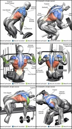Upper-back weight exercises Upper-back weight exercises Back and Shoulder Workout Beast Mode Back Weight Exercises, Lower Back Exercises, Weight Training Workouts, Abdominal Exercises, Stomach Exercises, Stretching Exercises, Gym Workout Chart, Gym Workout Tips, Biceps Workout