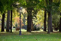 autumn swirl / 500px Light And Shadow, Autumn, Plants, Fall Season, Fall, Plant, Planets