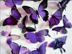 Purple, purple, purple!