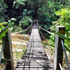 Parque Nacional da Floresta da Tijuca - RJ