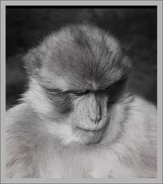 Jahr des Affen wurde in Österreich, Wien aufgenommen und hat folgende Stichwörter: Affe,  Horoskop.