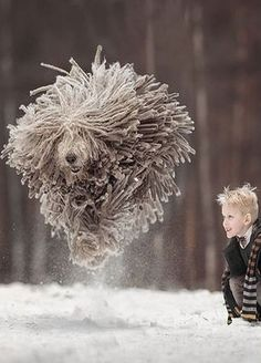 Heartwarming Photos of Little Kids and Their Big Dogs Big Dogs, Large Dogs, I Love Dogs, Cute Dogs, Dogs And Puppies, Animals For Kids, Animals And Pets, Funny Animals, Cute Animals