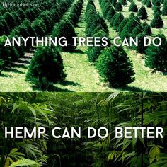 1 acre of #Hemp can produce the same amount of paper as 2-4 acres of #Trees.  Each Hemp Shirt Plants 11 Trees: www.hemphelps.org/collections/all-our-hemp-products