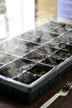 Seed Starting 101: everything you need to know about starting seeds