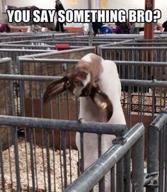 You say something bro?