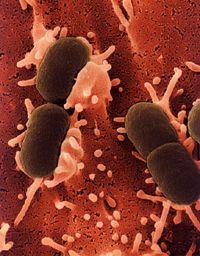 Microbiology easy writer website