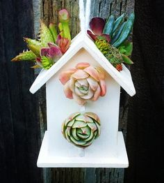 """DIY or DIM (""""Did It Myself"""") 4in/3in White Painted Birdhouse/Feeder that I made into a hanging Succulent planter."""