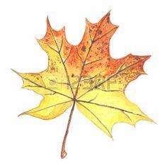 dibujos de hojas de otoño: Autumn maple leaf isolated on white background. Watercolor illustration. Vectores