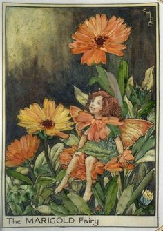 The Marigold Fairy from Cicely Mary Barker's Flower Fairies, embroidered Fantasy, Flower Fairies Books, Cicely Mary Barker, Fairy Pictures, Vintage Fairies, Beautiful Fairies, Fairy Art, Magical Creatures, Outdoor Art