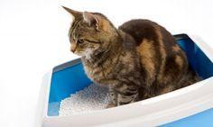 Cómo preparar arena sanitaria para gatos.