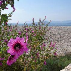 Flores, piedras, mar, montañas...  🔸La grandiosa belleza de una cala perdida. 🔹Bonitos recuerdos de lugares que encontramos por casualidad. ✨  🔸A veces, lo mejor que puedes hacer es equivocarte de camino. 😉   #hoyquieroenseñarte #flores #Ibiza #Eivissa #rinconesescondidos #naturaleza #mar #mediterráneo #islasbaleares #laspitiusas #instatraveller  〰️〰️〰️〰️〰️ ❇️ 〰️〰️〰️〰️〰️  💻 www.conlosninosenlamochila.com  〰️〰️〰️〰️〰️ ❇️ 〰️〰️〰️〰️〰️