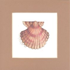 Scallop Shell 8 x 8 lithograph by CShoresInc on Etsy