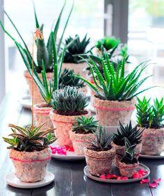 Las crasas dan vida a nuestro hogar ahora en vacaciones, ya que no necesitan muchos cuidados.  Clic: https://jardineriakuka.com/296-crasas-o-suculentas  #cactus #crasas #agaves #plantasdeinterior #plantasparaexterior