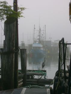 Name: Bob Lowden  Photo Location: Coal Harbour, Vancouver Island, BC  Subject: Heron on the dock    Story: I was walking the docks while my fishing buddies were getting a part for the boat. As I turned down one of the slips, I saw the heron sitting on the dock with the fog and boat behind. I snapped the picture quickly and it turned out pretty good.    http://joeys.ca/contest/rapala_entries2012.html