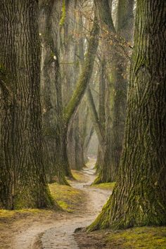 trees green nature forest fantasy my upload fairy tale Woods woodland path myth trail enchanting path in the woods silvaris magical landscape