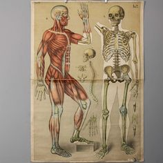 Anatomical Vintage Human Body Poster Chart - via Etsy