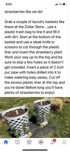Fruit Plants, Potted Plants, Garden Plants, Garden Tips, Lawn And Garden, Garden Ideas, Vertical Vegetable Gardens, Home Vegetable Garden, Container Vegetables