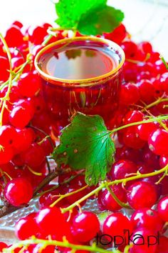 Topika: Nalewka z czerwonej porzeczki Drinks Alcohol Recipes, Alcoholic Drinks, B Food, Christmas Food Gifts, Polish Recipes, Irish Cream, Prosecco, Healthy Drinks, My Favorite Food