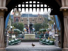 Donald Duck's cousin at Disney!