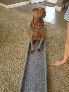 Dog Ramp - Pet ramp using closet shelving and how to build it. Dog Ramp For Truck, Dog Ramp For Stairs, Ramps For Trucks, Pet Ramp, Ramp For Dogs, Dog Bed Ramp, Front Stairs, Ramp Design, House Design