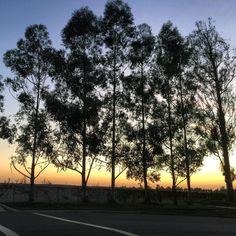 Another beautiful way to end the day. Gotta LOVE Daylight Savings!!!! デイライトセービングで日が一時間延びたせいか今日の地元での夕日はいつもより少し綺麗かな #sunset #sunsetsniper #sunsetporn #irvine #orangecounty by nealschaffer