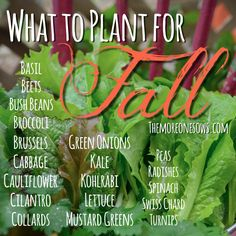The More One Sows; The Greater The Harvest: What to Plant for Fall. {Cool-Season Crops to Plant in Summer}