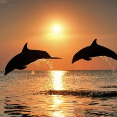 Swim with Dolphins & Watch the Sunset #Honeymoon #Florida