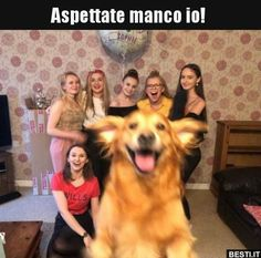 Golden retriever photobombs owner's group birthday picture Golden retriever photobombs owner's birthday picture in Tewkesbury Funny Dogs, Funny Animals, Funny Memes, Hilarious, Super Pictures, Happy Pictures, Dog Photos, Funny Photos, Funniest Photos