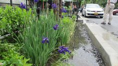 These Curbside Mini-Gardens Could Help Save New York City Billions of Dollars