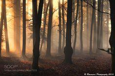 Nebel by RuiSoaresdaSilva. Please Like http://fb.me/go4photos and Follow @go4fotos Thank You. :-)