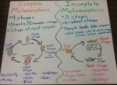 Grade level: grade SPI Distinguish between complete and incomplete metamorphosis. The students will create their own poster of complete and incomplete metamorphosis after learning about it and grand conversation. 8th Grade Science, Middle School Science, Elementary Science, Science Classroom, Teaching Science, Science Education, Science Anchor Charts 5th Grade, Science Lesson Plans, Science Resources