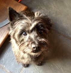Col. Potter Cairn Rescue Network Post Adoption Blog: CP Tayana nka Ana is Happily Home!